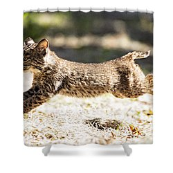Bobcat Kitten On The Run Shower Curtain