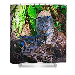 Bobcat On The Hunt Shower Curtain