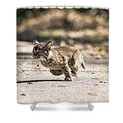 Bobcat On The Run Shower Curtain