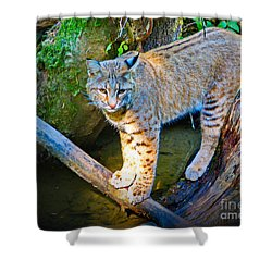 Bobcat Scanning The Water Shower Curtain