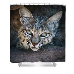 Bobcat Stare Shower Curtain by Elaine Malott