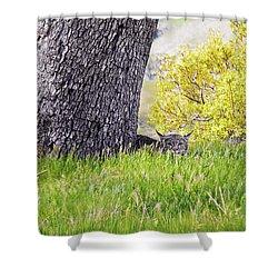 Bobcat Watch Shower Curtain by Karen  W Meyer