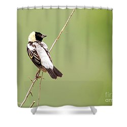 Shower Curtain featuring the photograph Bobolink Looking At You by Ricky L Jones