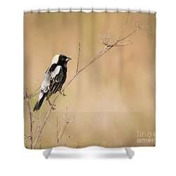Shower Curtain featuring the photograph Bobolink  by Ricky L Jones