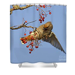 Bohemian Waxwing Shower Curtain by Liz Leyden