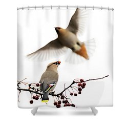 Shower Curtain featuring the photograph Bohemian Waxwings by Mircea Costina Photography