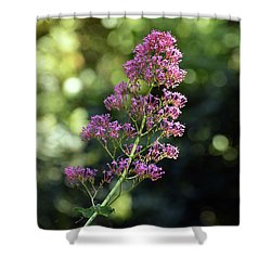 Bokeh Of Anacapri Flower Shower Curtain