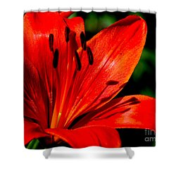 Bold Lily Shower Curtain
