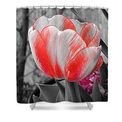 Bold Tulip Shower Curtain