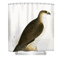 Bonelli's Eagle Shower Curtain by English School