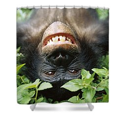 Shower Curtain featuring the photograph Bonobo Smiling by Cyril Ruoso