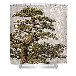 Bonsai Tree Shower Curtain