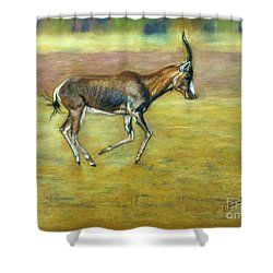 Bontebok Shower Curtain