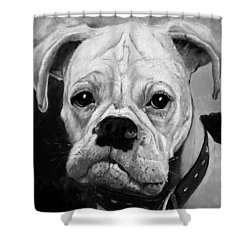 Boo The Boxer Shower Curtain