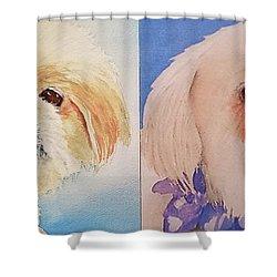 Booboo Baxter H Shower Curtain