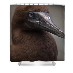 Booby Shower Curtain