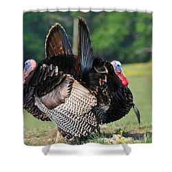 Book Ends Shower Curtain by Todd Hostetter