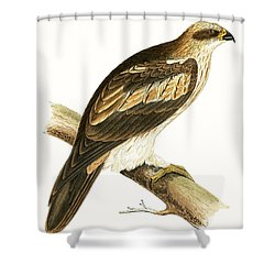 Booted Eagle Shower Curtain by English School