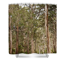 Shower Curtain featuring the photograph Boranup Drive Karri Trees by Ivy Ho