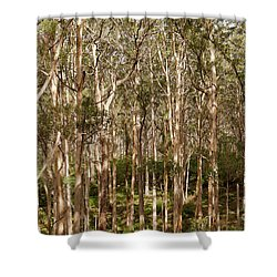 Shower Curtain featuring the photograph Boranup Forest  by Ivy Ho