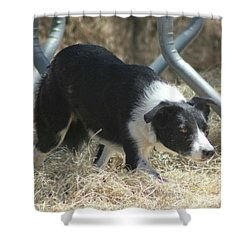 Border Collie At Work Shower Curtain