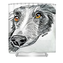 Border Collie Dog Colored Pencil Shower Curtain by Scott D Van Osdol