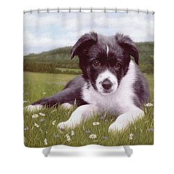 Border Collie Puppy Painting Shower Curtain by Rachel Stribbling