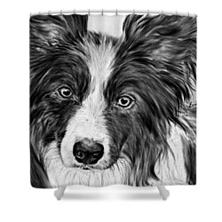 Border Collie Stare Shower Curtain