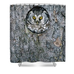 Boreal Owl Aegolius Funereus Peaking Shower Curtain by Konrad Wothe