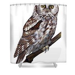 Boreal Owl Tengmalm's Owl Aegolius Funereus - Nyctale De Tengmalm - Paerluggla - Nationalpark Eifel Shower Curtain