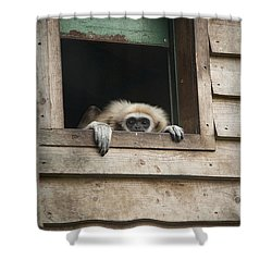 Bored Shower Curtain by Roger Lighterness