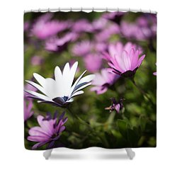 Shower Curtain featuring the photograph Born To Stand Out by Lora Lee Chapman