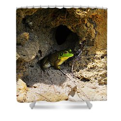 Shower Curtain featuring the photograph Boss Frog by Al Powell Photography USA