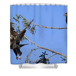 Bossy Eagle Shower Curtain