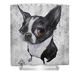 Boston Terrier - Grey Antique Shower Curtain