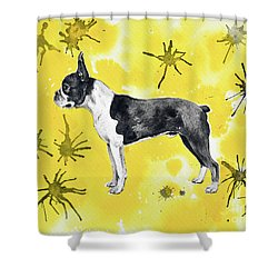 Shower Curtain featuring the painting Boston Terrier On Yellow by Zaira Dzhaubaeva