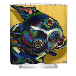 Boston Terrier Shower Curtain by Robert Phelps