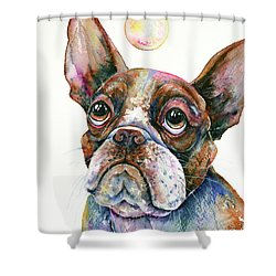 Shower Curtain featuring the painting Boston Terrier Watching A Soap Bubble by Zaira Dzhaubaeva