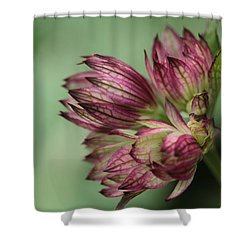 Botanica .. New Beginnings  Shower Curtain