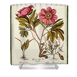 botanica nostalgia iv botanical study shower curtain by tina lavoie
