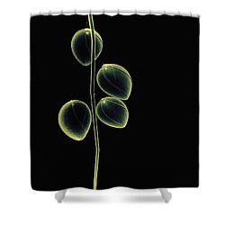 Botanical Study 2 Shower Curtain by Brian Drake - Printscapes