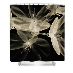Botanical Study 4 Shower Curtain by Brian Drake - Printscapes