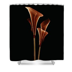 Botanical Study 5 Shower Curtain by Brian Drake - Printscapes