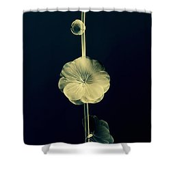 Botanical Study 6 Shower Curtain by Brian Drake - Printscapes