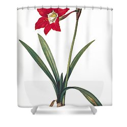 Botany: Lily Shower Curtain by Granger