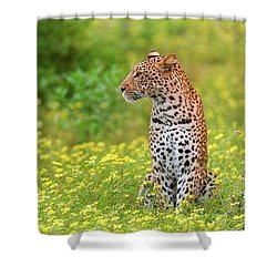 Botswana Leopard  Shower Curtain
