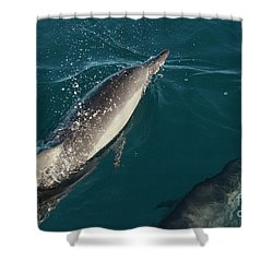 Bottle Nose Dolphin Shower Curtain