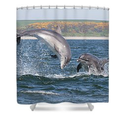 Bottlenose Dolphin - Moray Firth Scotland #49 Shower Curtain