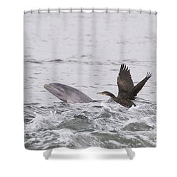 Baby Bottlenose Dolphin - Scotland #10 Shower Curtain