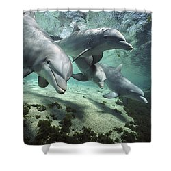 Shower Curtain featuring the photograph Four Bottlenose Dolphins Hawaii by Flip Nicklin